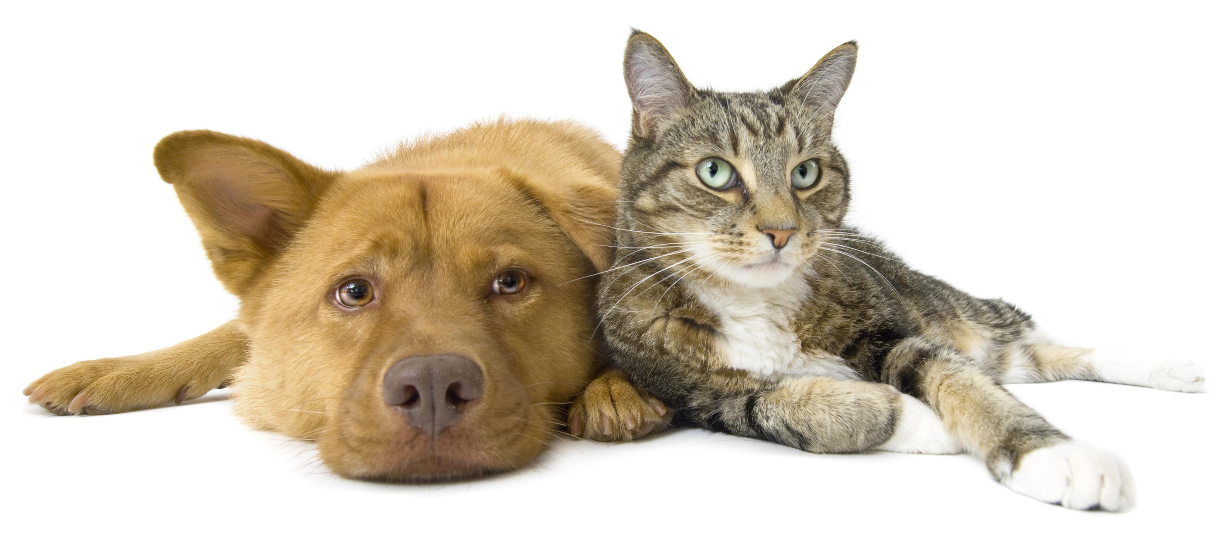 toidulisand lemmikloomadele koerale ja kassile